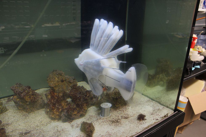 Scientists have just created blood-powered fish robots - Photo 1.