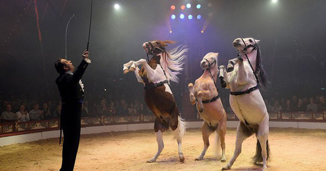 The Germans invited each other to see the hologram circus to protest animal violence - Photo 1.