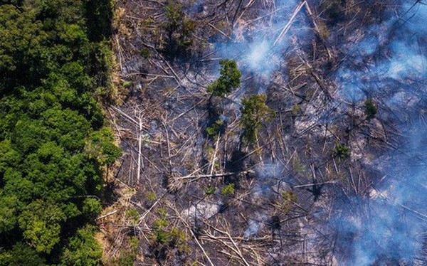 The New York Times: Analysis of satellite images accurately points to the culprit of the forest disaster in Amazon - Photo 1.