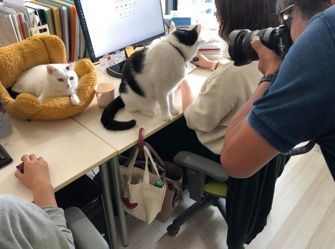 Strange story: This Japanese technology company quotes a cat-raising allowance for employees - Photo 1.