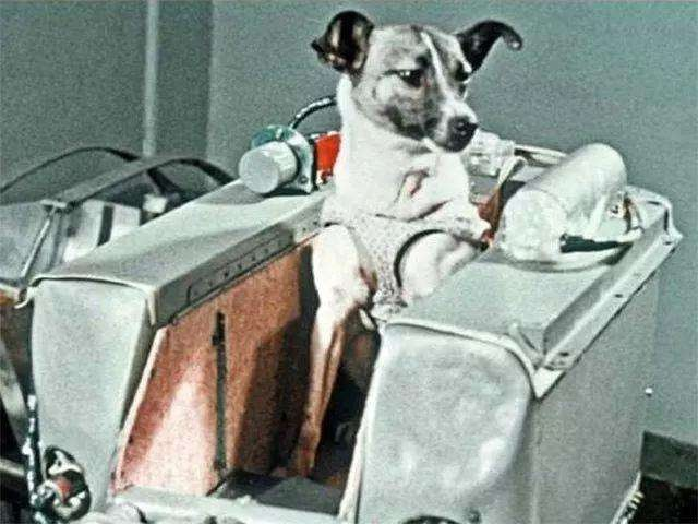 The dark corner of space science: Laika - the only dog ​​floating in space - Photo 1.