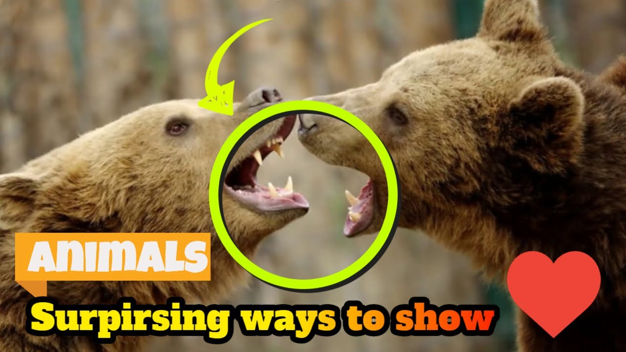 ✅ How Animals Show Their Love - Proof Sometimes Animals Can Be More Loving Than Humans