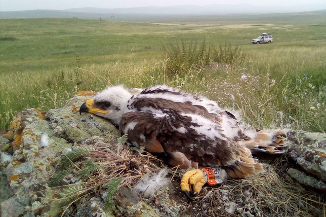 The eagle broke the chi chi: disappeared for a month, just appeared and texted the house clean newspaper Russia science fund - Photo 1.