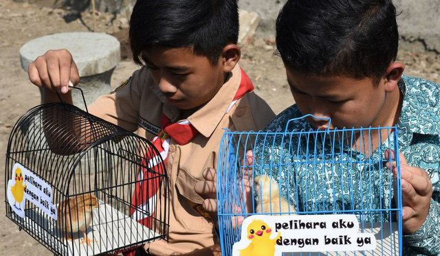 Indonesian students have to raise chickens to ... detox smartphone - Photo 1.
