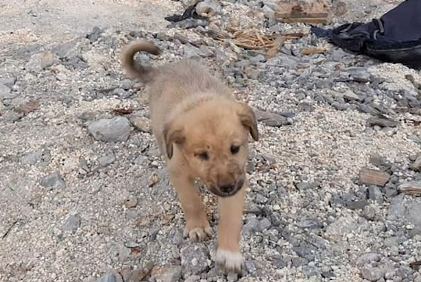 BoBe puppies were found by journalist Fared Alhor in the ruined building of Baghdadi on October 30. Photo: Fared Alhor