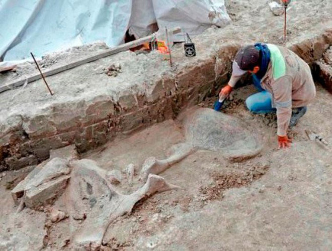 The surprising discovery of the first mammoth pit trap in human history - Photo 1.