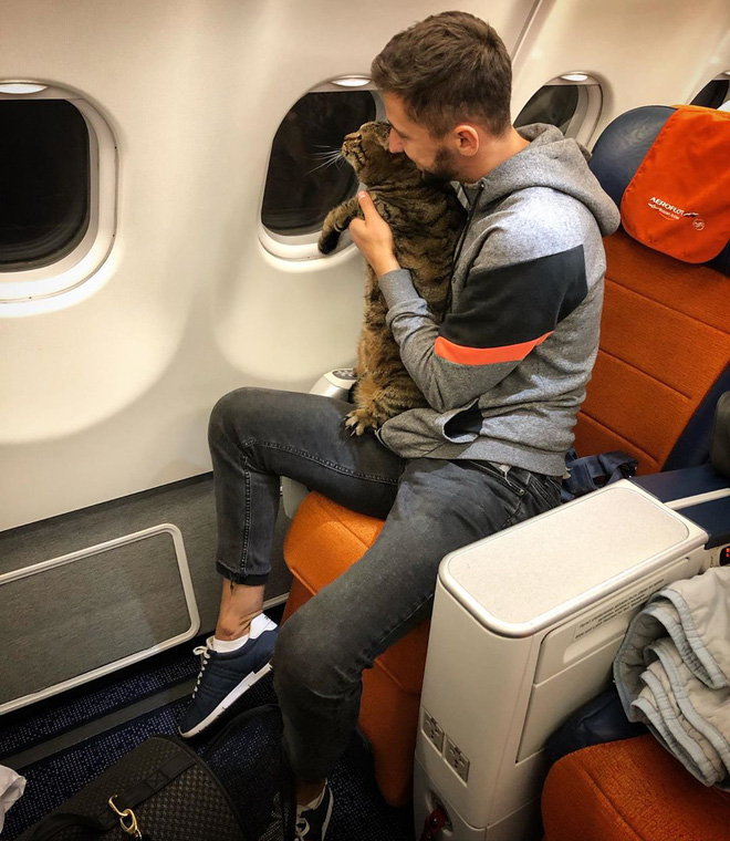 Young people excitedly post Facebook showing off tricks to bring overweight cats on the plane and the bitter end - Photo 1.