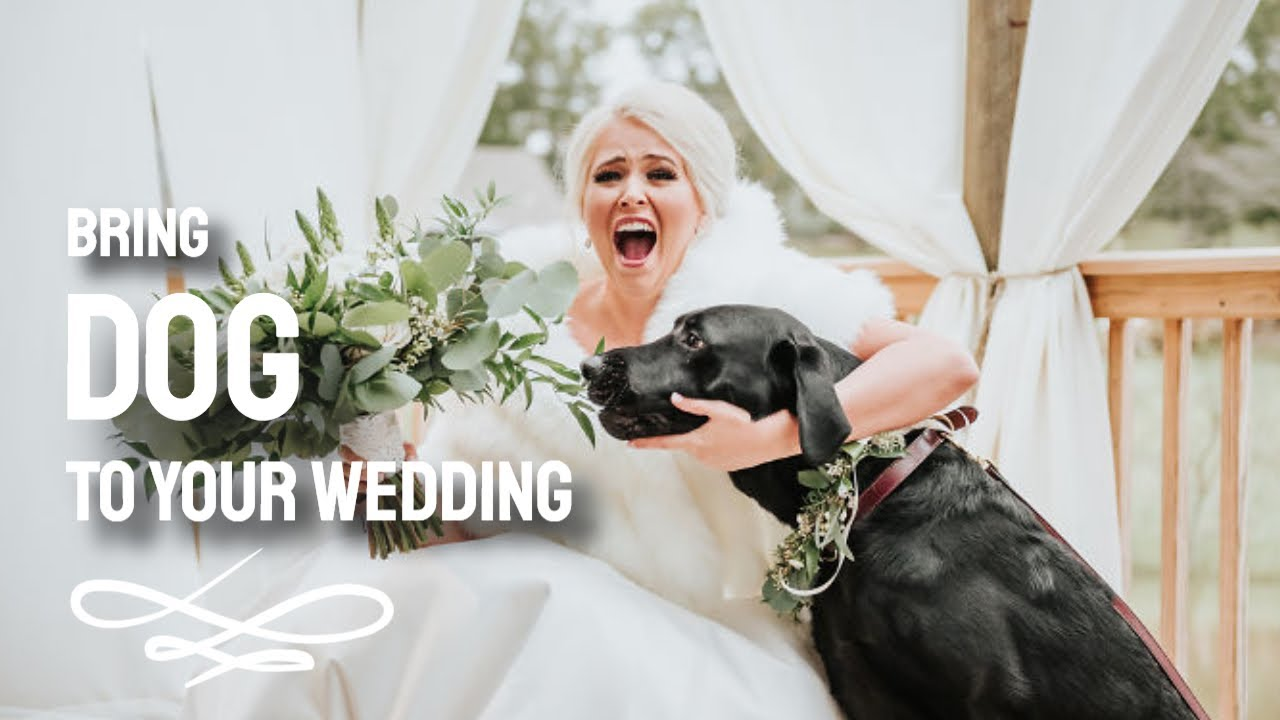 Bride Decided To Bring Her Dog To Her Photoshoot - Bring My Dog To My Wedding