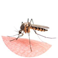 Prevention and treatment against mosquito bites