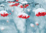 Collection of the most beautiful Winter Wallpapers