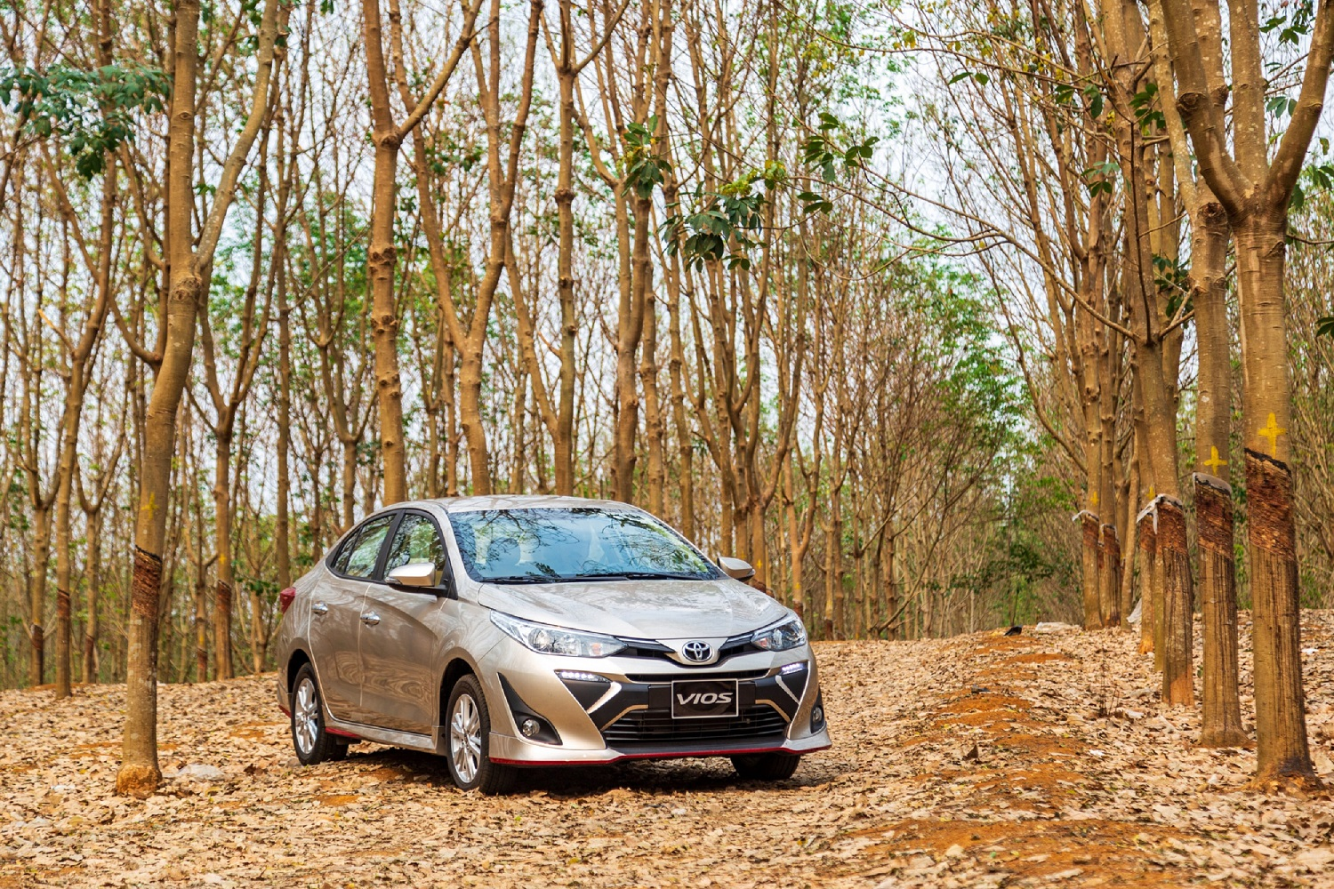 January 2021: Toyota Vietnam achieved sales of more than 4,500 toyota-vios-2.JPGs