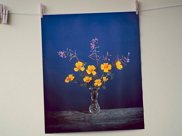 """Video: Brendan Barry makes 20"""" x 24"""" wildflower image using camera obscura and color reversal process: Digital Photography Review"""