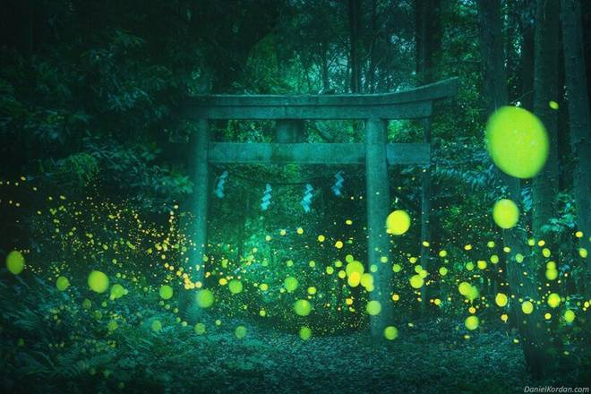 Daniel Kordan reveals an enchanting Japanese forest lit up by thousands of fireflies 3 minutes to read