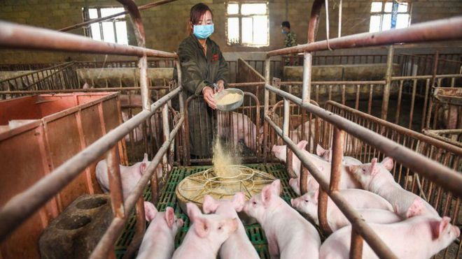 Why did Huawei 'expand' into pig farming?  - Photo 1