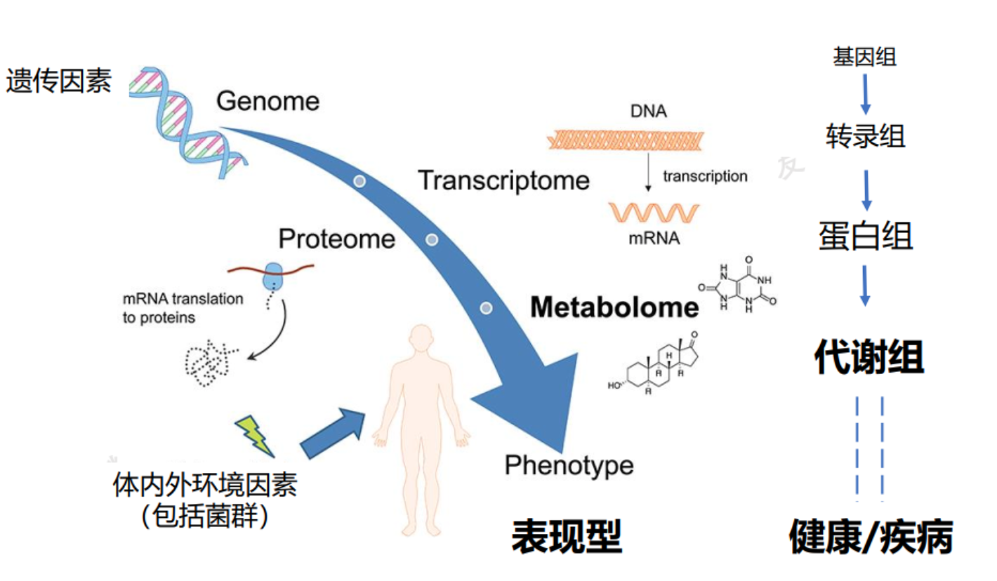 """36Kr First Release   Provides full solutions for clinical mass spectrometry and metabolomics, """"Nomi Metabolism"""" received 100 million yuan A round of financing"""