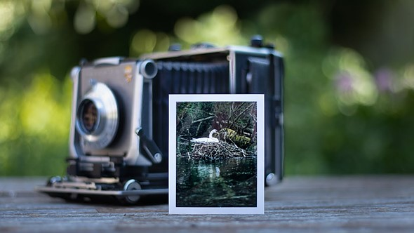 Video: Photographer uses a 4x5 large format camera and expired film for wildlife photography: Digital Photography Review